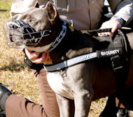 Reflective Nylon Dog Harness- Best Harness for Pitbull Training