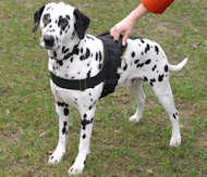 nylon dog harness for dalmatian breed