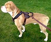 Duke wearing our Agitation / Protection / Attack Leather Dog Harness H1