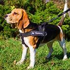 Nylon Beagle Harness for Pulling, Tracking, Training and SAR