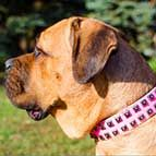 Original Design Pink Leather Cane Corso Collar with studs