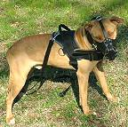 Well Fitting Leather Dog Muzzle for Pitbull Agitation Training