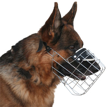 German Shepherd M9 muzzle