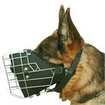 German Shepherd with M57 muzzle on