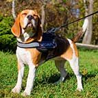 Nylon Beagle Harness with Reflective Strap for Training, Walking, Police Service, SAR and More