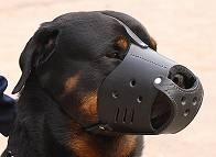Everyday Rottweiler Leather dog muzzle - product code M51