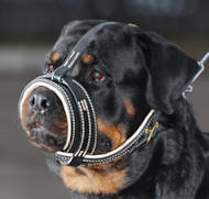 Royal Nappa Leather Dog Muzzle - product code M88_1