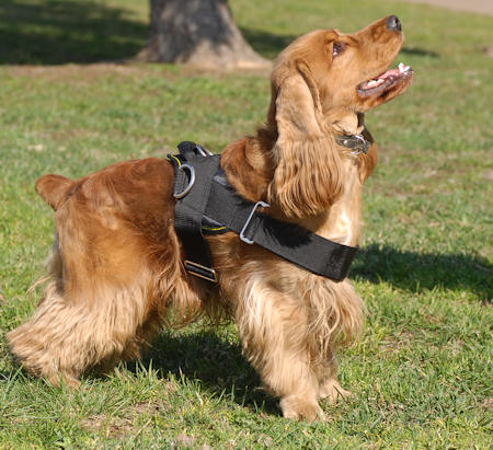 walking dog harness for american cocer spaniel