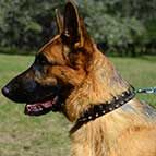 Fashionable Spiked and Studded Leather German Shepherd Collar