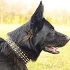 German Shepherd Decorated Leather Dog Collar