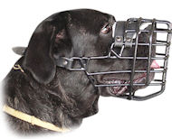 Perfect Rubber Coated Wire Cage Muzzle for Cane Corso Winter Walking/Training