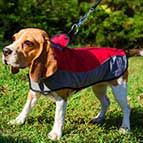Warm Nylon Winter Beagle Coat for Walking