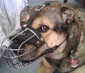 Gorgeous Ginger wearing our Wire Basket Dog Muzzles Size Chart - M4light