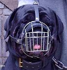 Gorgeous Jazzell wearing our Wire Basket Dog Muzzles Size Chart - M4light