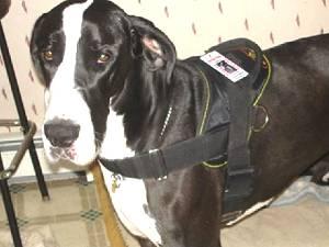 service dog harness
