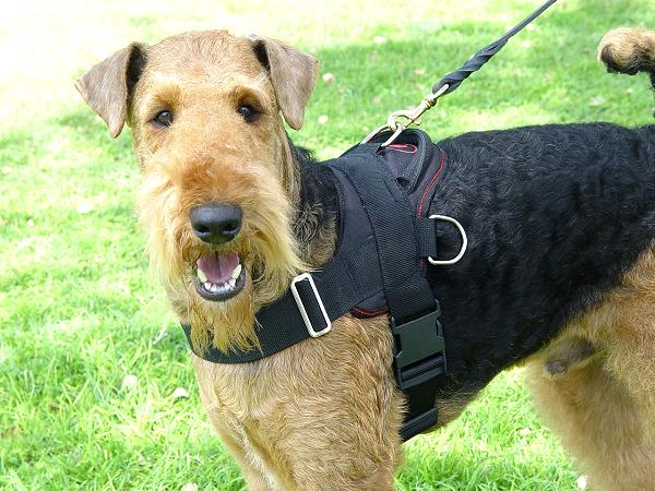 Adjustable Nylon Airedale Terrier Harness