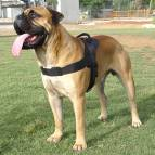 Nylon dog harness for tracking / pulling Designed to fit Bullmastiff
