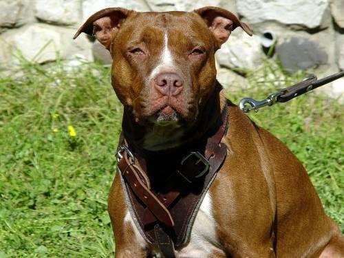 Baasjes op de vuist na bijtincident honden