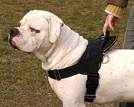 american bulldog all weather walking dog harness