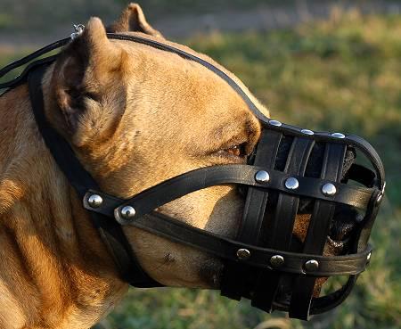 amstaff muzzle leather